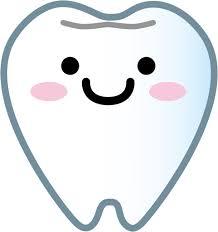 健康な歯の構造についての話その①